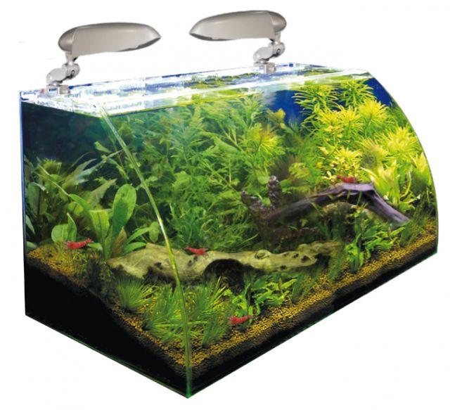 nano aquarium wave box vision 60 avec vitre avant courb. Black Bedroom Furniture Sets. Home Design Ideas