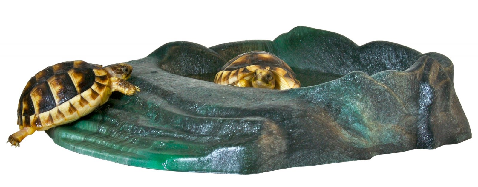 RRB-11-turtles