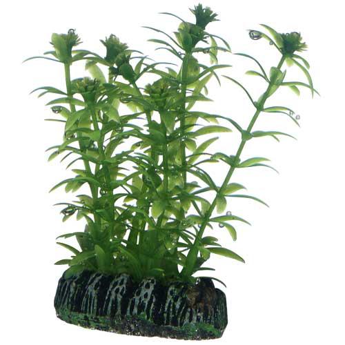 HOBBY Lagarosiphon 7 cm plante artificielle pour aquarium