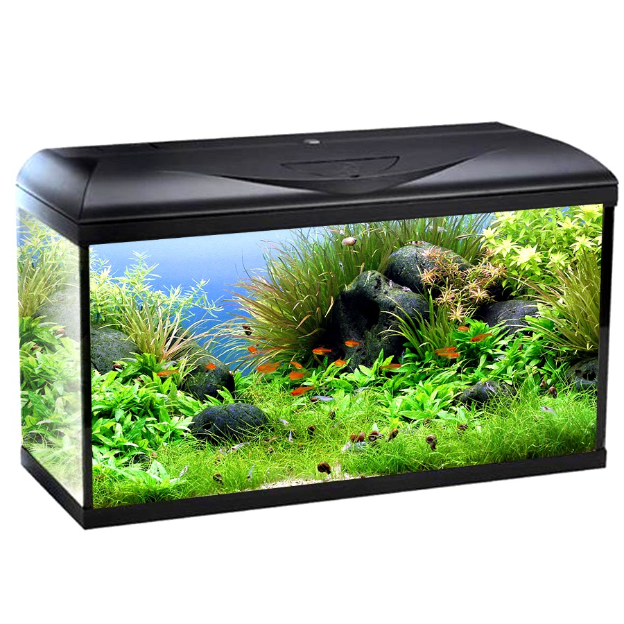 wave riviera basic 80 aquarium 95l tout quip de 80cm avec ou sans meuble tous les aquariums. Black Bedroom Furniture Sets. Home Design Ideas