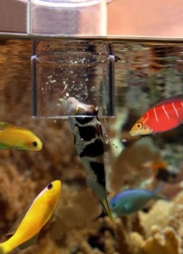 Grotech cylindre d 39 alimentation pour poissons d 39 aquarium for Alimentation poisson aquarium