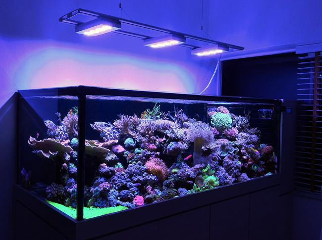 ai hydra 52 hd black 136w re leds haute puissance pour l 233 clairage des aquariums r 233 cifaux