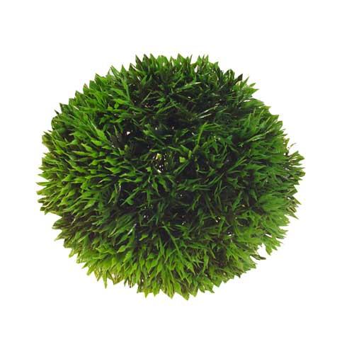 hobby-plant-ball