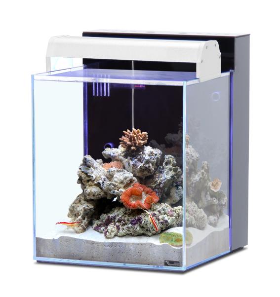 Aquarium aquatlantis nano marin 40 l tout quip coloris for Aquarium nano marin