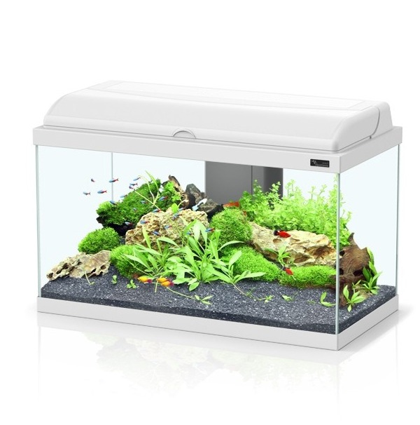 ou acheter un aquarium 28 images aquarium aquatlantis aquadream 60 tout 233 quip 233 54 l. Black Bedroom Furniture Sets. Home Design Ideas