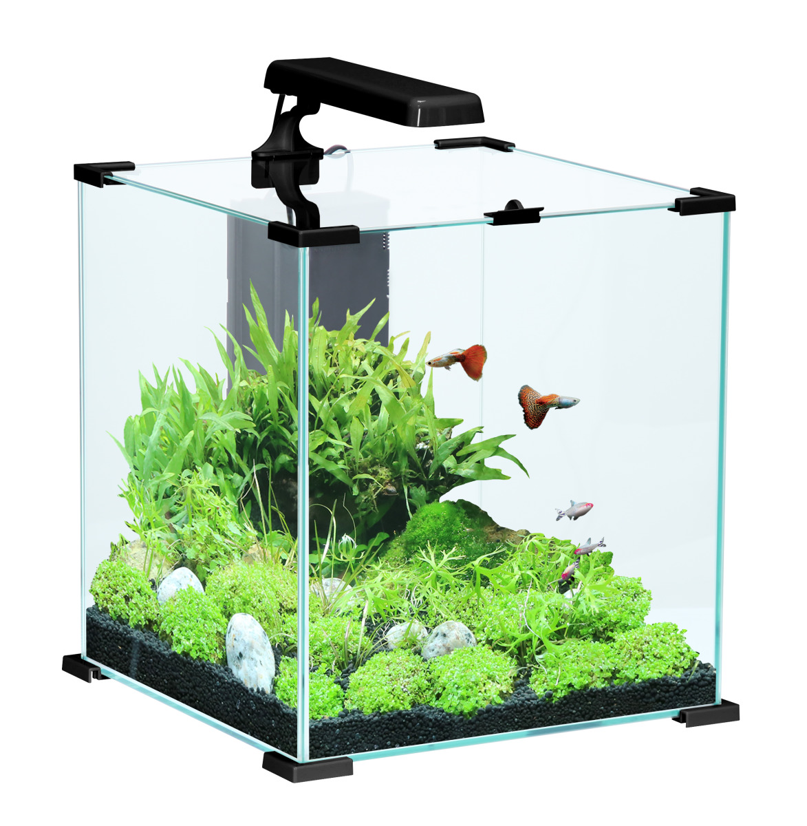 zolux aqua nanolife cube 30 noir nano aquarium 33 l tout. Black Bedroom Furniture Sets. Home Design Ideas
