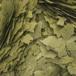 3-Algae-Flakes-100
