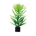 HOBBY Didiplis mini 6 cm lot de 5 plantes artificielles idéales pour l'aquascaping