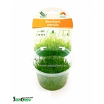 Eleocharis parvula plante d'aquarium gazonnante qualité Prémium en gobelet In Vitro 100 ml