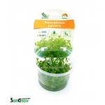 Proserpinaca palustris plante d'aquarium qualité Prémium en gobelet In Vitro 100 ml