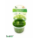 Spiky moss (Taxiphyllum sp.) mousse qualité Prémium en gobelet In Vitro 100 ml