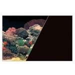 ZOLUX Poster d'aquarium fond Corail et Noir. Longueur 120 cm x 60 cm de hauteur