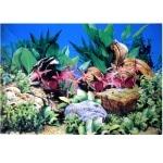 Poster d'aquarium à la coupe Aquarium Planté, imprimé sur une face. Hauteur 60cm