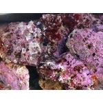 Pierres Vivantes Prémium de Méditerranée 30 Kg pour aquarium marin livrées en 24h