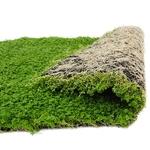 Tapis planté Epaqmat XXL Micranthemum Monte Carlo Dimension du tapis 60 x 40 cm