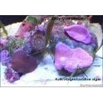 easy-purple2_470_470