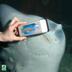 shark_2