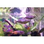 arcadia_aquarium_300x387