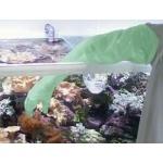 TUNZE Lot de 10 gants de protection contre les coraux urticants et autres animaux marins pouvant causer des brulures