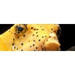 prodibio_maladie_spots_velvets_maladies_velour_point_blanc_poisson_eau_mer_2