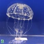jbl-medusa-1
