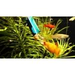 jbl-planktonpur-eau-douce-aquarium