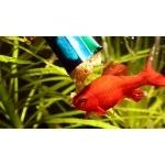 jbl-plankton-pur-eau-douce-aquarium-2