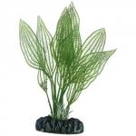 HOBBY Aponogeton 16 cm plante artificielle pour aquarium