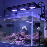 rempe-led-aquarium-sunrise-4