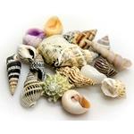 HOBBY Sea Shells Set L lot de 5 coquilles d'éscargots pour bernard l'hermite ou pour la décoration de l'aquarium