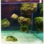 roche-flottante-aquarium