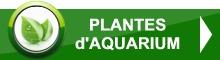 Plantes d'aquarium