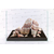AQUADECO-Pink-Cloud-Rock-2-roche-aquarium-decoration-aquascaping