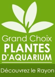 plantes-d-aquarium-vente-en-ligne