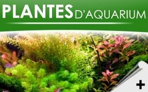 plantes-plv-2
