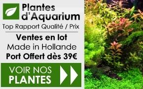 Plantes d'aquarium pas cher...