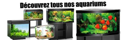 decouvrez-aquarium