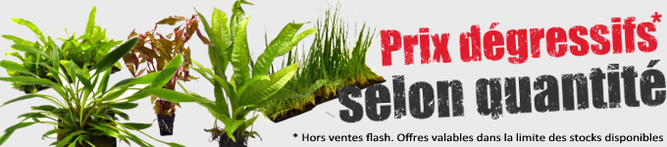 am nagement d coration et plantes pour aquarium akouashop
