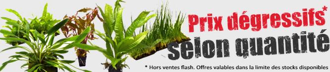 plante-aquarium-achat-en-ligne