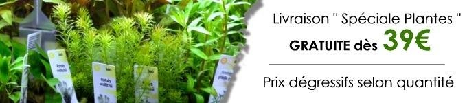plante-d-aquarium-livraison-offerte-dès-39-€