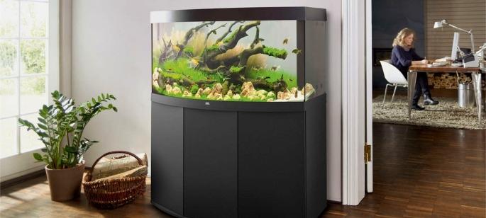 Fiches conseils aquariophilie blog de boutique for Vente aquariophilie