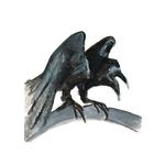 corbeau11-web