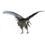 corbeau01-web