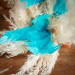 plume-turquoise1