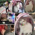 Sac-de-transport-pour-chat-respirant-Transparent-chiot-chat-sac-dos-chats-bo-te-Cage-petit