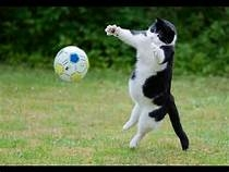 CHAT BALLE