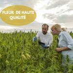 FLEUR OUTDOOR DE HAUTE QUALITÉ (1)