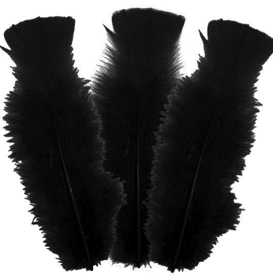 10 plumes Noires 5 à 10 cm