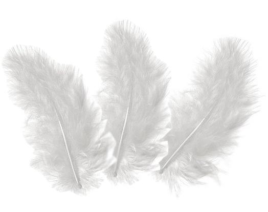 10 plumes d 39 oies blanches 5 10cm loisirs cr atifs