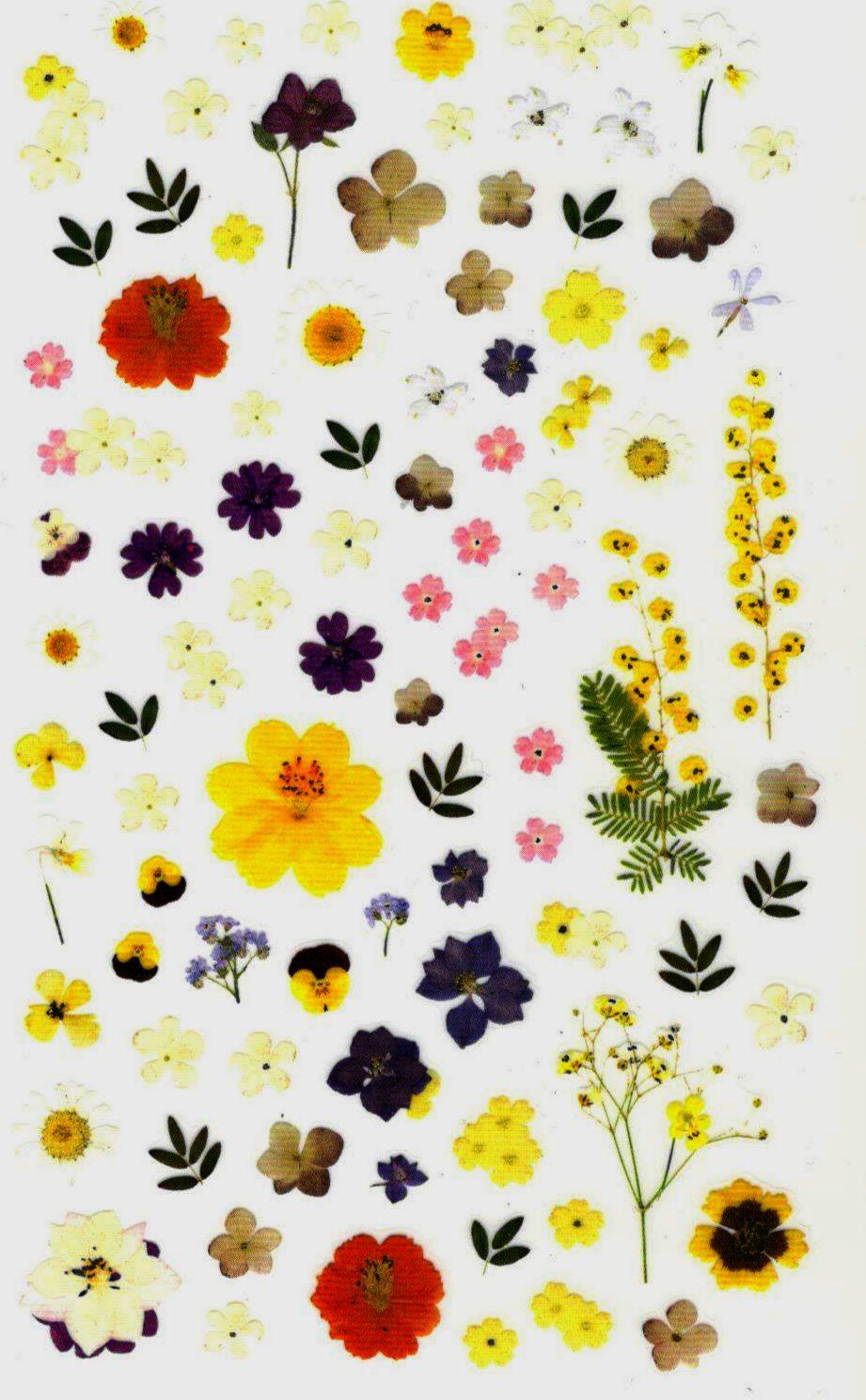 80 petits stickers fleurs séchées